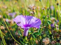 Kryp och blomma Arkivbild