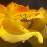 Kryp på blomma fotografering för bildbyråer