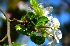 Kryp på en blomma Arkivfoton