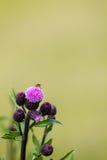 Kryp på en blomma Royaltyfria Foton
