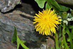 Kryp på en blomma Arkivbild
