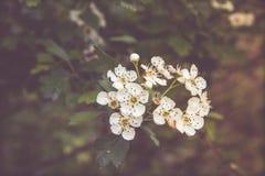 Krypa blommor Royaltyfri Bild