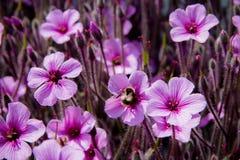 Krypa blommor Arkivbild