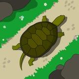 krypa sköldpadda Fotografering för Bildbyråer