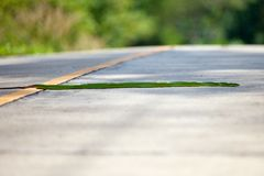 krypandevägorm Royaltyfri Fotografi