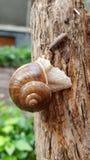 Kryps snails arkivfoto
