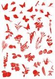 krypväxter Arkivfoto