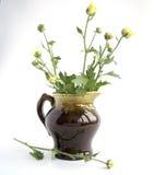 Krysantemum i en grön tillbringare Arkivbild