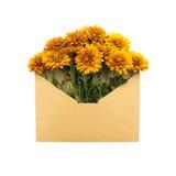 Krysantemum i kuvertet Arkivfoton