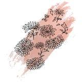 Krysantemum räcker den utdragna skissade illustrationen Royaltyfria Bilder