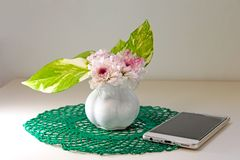 Krysantemumblommor och sidor för guld- pothos arkivfoton