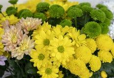 Krysantemumblommor, olik art och färgnärbild arkivfoto