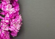Krysantemumblommor på en grå bakgrund royaltyfri fotografi