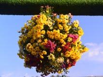Krysantemumboll royaltyfri fotografi