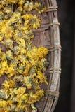 Krysantemumte arkivfoton