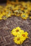 Krysantemumte arkivbilder