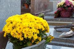 Krysantemumväxt på en gravsten Fotografering för Bildbyråer