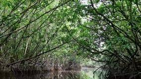 Kryssa omkring bland den fantastiska mangroveskogen i Thailand stock video