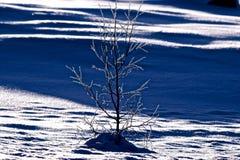 Krystaliczny śnieg Zdjęcia Royalty Free