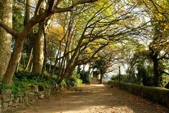Krystaliczny pałac uprawia ogródek w Oporto Fotografia Royalty Free