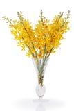 krystaliczny storczykowy wazowy kolor żółty Fotografia Stock