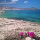 Kryształ - jasny błękitne wody ocean z kwiatami Zdjęcia Stock