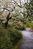 Kryształ Skacze Rododendronowi ogródy zdjęcie stock