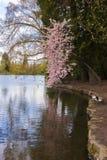 Kryształ Skacze Rododendronowi ogródy fotografia royalty free