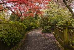 Kryształ Skacze Rododendronowi ogródy fotografia stock
