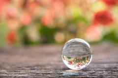 Kryształowa kula z odbiciem czerwień kwitnie na drewnianym tle Zdjęcie Royalty Free
