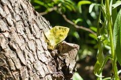Kryształu kamień w zielony plenerowym Obraz Royalty Free