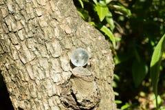Kryształu kamień w zielony plenerowym Zdjęcia Stock