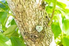 Kryształu kamień w zielony plenerowym Zdjęcie Stock