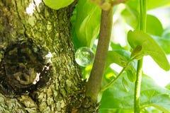 Kryształu kamień w zielony plenerowym Obrazy Stock