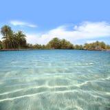Kryształ nawadnia brzeg z drzewkami palmowymi Obraz Royalty Free