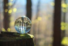 Kryształowa kula w lesie Zdjęcia Royalty Free