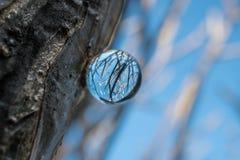 Kryształowa kula z odbiciem zimy niebieskie niebo i drzewo Obrazy Royalty Free