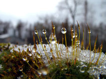 kryształy lodu Fotografia Stock