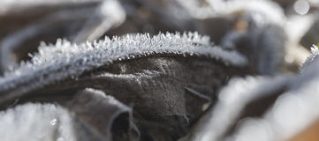 Kryształy zima Fotografia Stock