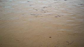 kryzysu ekologiczny środowiskowy fotografii zanieczyszczenie Rzeka niesie śmieci po powodzi, Uzhgorod, Ukraina zdjęcie wideo