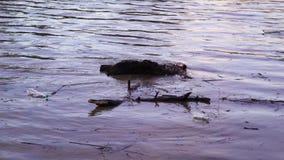 kryzysu ekologiczny środowiskowy fotografii zanieczyszczenie Rzeka niesie śmieci po powodzi, Uzhgorod, Ukraina zbiory wideo