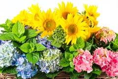 krzaków kolorowi hortensia słoneczniki Zdjęcia Royalty Free