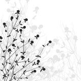 krzak kwitnie dzikiego ilustracji