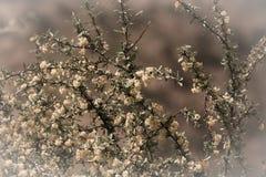 krzak kwitnie kolor żółty głębokość pola płytki tinted Fotografia Royalty Free