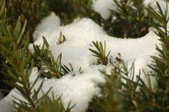krzak śnieg Obrazy Royalty Free