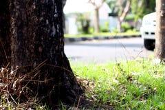 Krzak Pod drzewem Zdjęcia Royalty Free