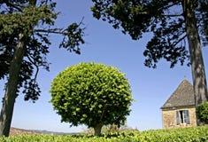 krzak pudełkowy ogrodu kształtny drzewo Fotografia Royalty Free