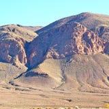 krzak w dolinnym Morocco Africa atlant sucha góra Obrazy Royalty Free