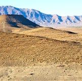 krzak w dolinnym Morocco Africa atlant sucha góra Zdjęcie Royalty Free