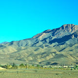 krzak w dolinnym Morocco Africa atlant sucha góra Zdjęcia Royalty Free